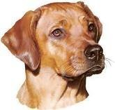 Drawing of Scooby the Dog
