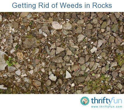 Getting rid of weeds in rocks thriftyfun for How to get rid of weeds in garden