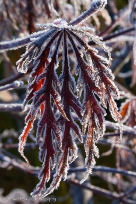 Frosty Morning 2