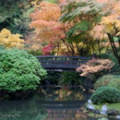 Autumn Reflections at Portland Japanese Garden