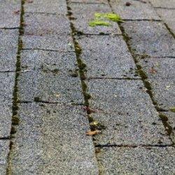 Roof Maintenance Thriftyfun