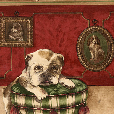 Wallpaper border with dog in plaid dog bed.
