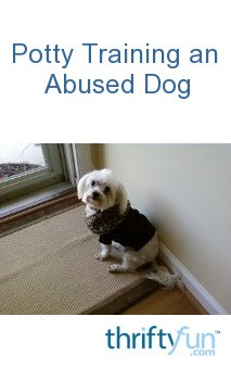 How To Potty Train An Abused Dog