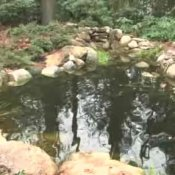 How to Close Down Your Pond For the Season, Koi Pond in Late Fall
