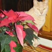 Nutmeg the Cat by Poinsettia