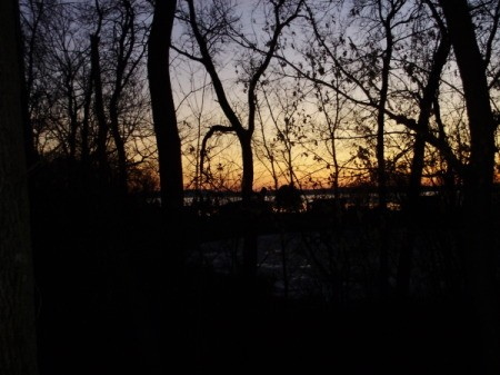 Sunet Through Clearing in the Trees