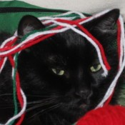 a black cat with yarn wrapped around his head