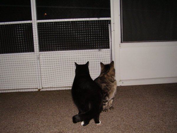 Keeping Cats from Scratching Screen Doors | ThriftyFun
