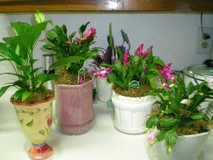 Planters can be made out of many recycled items.y