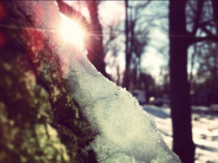 The sun shining on a winter scene, melting the snow.