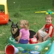 A black and brown dog in a sandbox with some children.