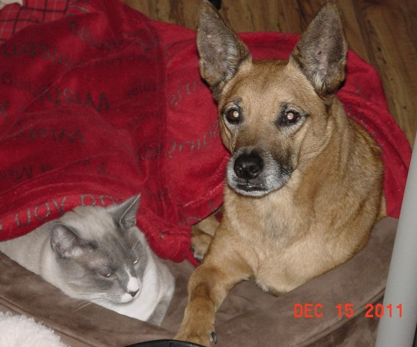 A cat and dog sharing a pet bed.
