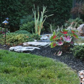 Landscaping Design Tips, landscaped yard