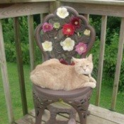 An orange cat sitting outside on a flower covered chair.