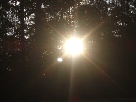 Scenery: Morning Sun, the sun peeking through the trees.