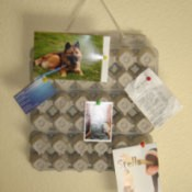 Egg Carton Bulletin Board