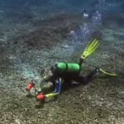 Top Caribbean Vacation Spots, Scuba Diver in the Caribbean