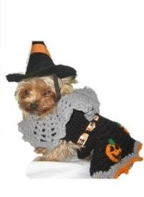 A dog dressed as a witch for Halloween.