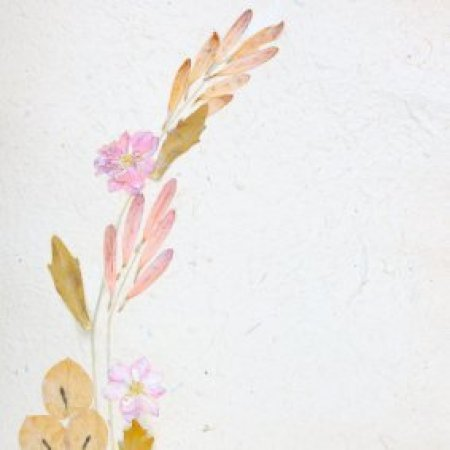 Plantable paper and pressed flowers.