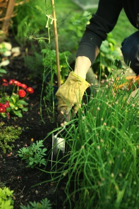 Hands digging in garden with hand tools