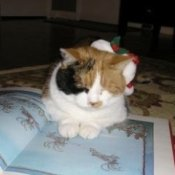 A Meowy Christmas, a cat with a santa hat.