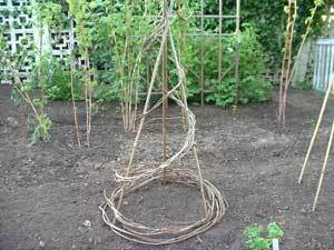 A trellis made out of grapevine