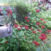 Creative Planters For Garden Focal Points, such as a metal tea kettle