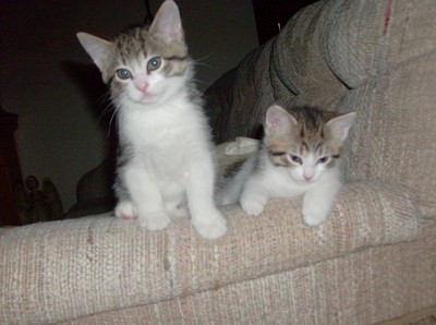 Tink and Prince as kittens 1