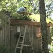 Making a Green Roof