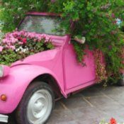 An old car with flowers planted in it.