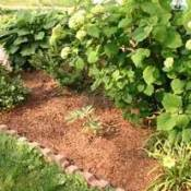 Choosing the right organic mulch.