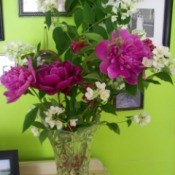 Old Fashioned Flower Arrangement of peonies, mock orange and weigela.