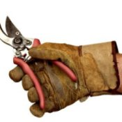 Hand holding Pruners