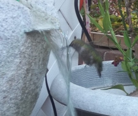 humming bird bath 3