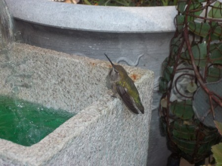 humming bird bath 4