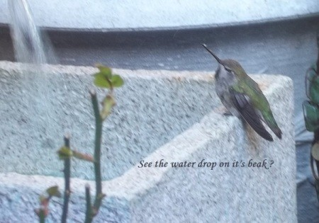 humming bird bath 5