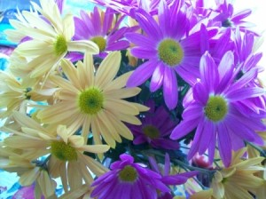 A Spring Bouquet of white and purple daisies.
