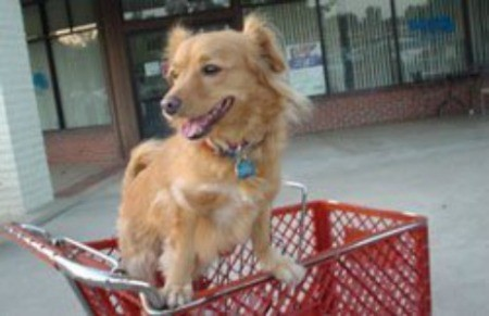 Adopting a Mutt mixed breed light brown dog in shopping cart