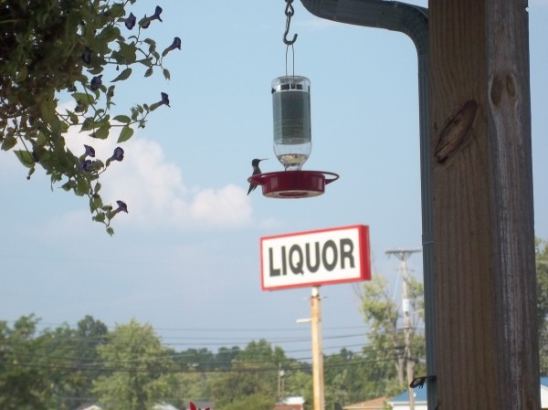 Hummbingbird at a feeder, with liquor sign in background.