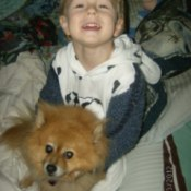 Chompers (Pomeranian) with a boy.