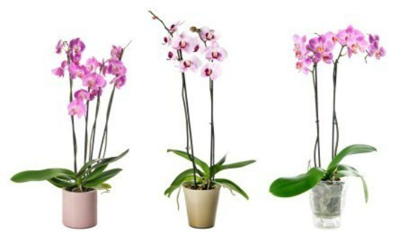 3 different potted orchids