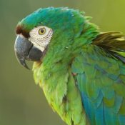 Photo of a parrot.
