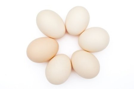 Eggs in Circle on White Background