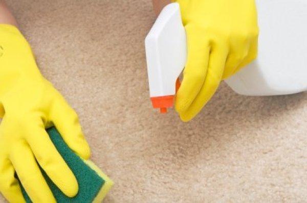 Bellevue Vomit Before Carpet