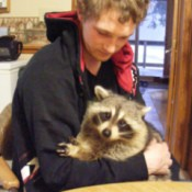 Raccoon in young man's arms