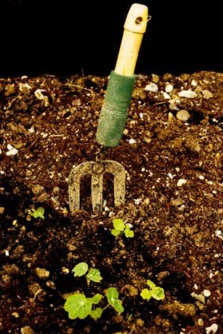 Garden Fork and Seedlings