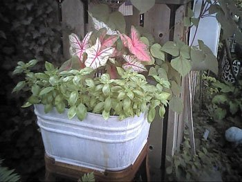 Fall Clematis Container