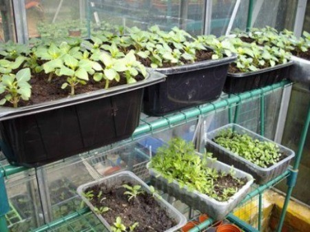 Recycled plastic containers for seedlings.