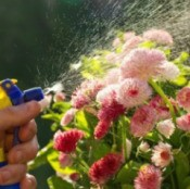Spraying Flowers
