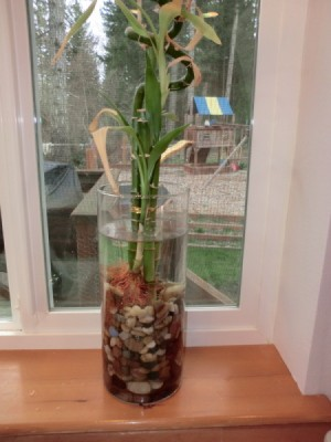 Growing Plants In Water Thriftyfun